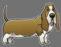 Basset hound dog Royalty Free Stock Images