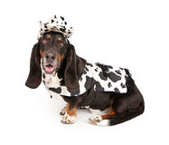 Basset Hound Dog Wearing a Cowboy Outfit Stock Photography