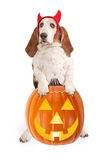Basset Hound Dog wearing devil horns. Isolated on white royalty free stock photos