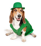 Basset Hound Dog Wearing St Patricks Day Outfit. Basset Hound dog wearing green St. Patrick's Day outfit. Isolated on white royalty free stock photos