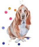 Basset Hound. Dog.  on white background. Stock Photo