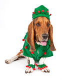 Basset Hound Elf Dog Royalty Free Stock Image