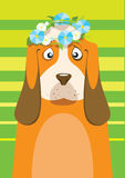 Basset hound with flower Stock Photo