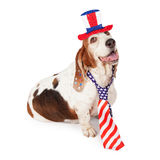 Basset Hound on Fourth of July Royalty Free Stock Photography