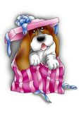 Basset hound in a gift pack. Nice basset hound jumping out from a gift pack Royalty Free Stock Photo