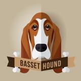 Basset Hound Royalty Free Stock Photo