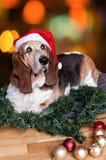 Basset Hound mit Sankt-Hut am Weihnachten Lizenzfreies Stockfoto