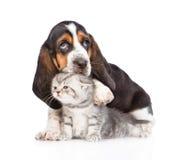 Basset hound puppy embracing tiny kitten. isolated on white. Backround royalty free stock images