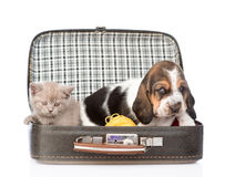 Basset hound puppy and kitten  sitting in a bag. isolated on white Stock Photos