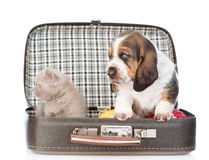 Basset hound puppy and kitten sitting in a bag. isolated on white Royalty Free Stock Photography