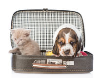 Basset hound puppy and kitten sitting in a bag. isolated on white Stock Photo