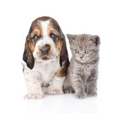 Basset hound puppy with kitten sitting together. isolated. On white royalty free stock photos
