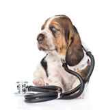 Basset hound puppy with stethoscope on his neck. isolated on white Royalty Free Stock Image
