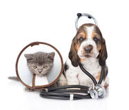 Basset hound puppy with stethoscope on his neck and kitten. isolated on white Royalty Free Stock Images