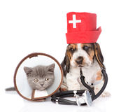 Basset hound puppy with stethoscope on his neck and kitten. isolated Royalty Free Stock Image