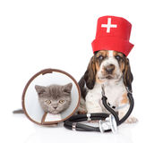 Basset hound puppy with stethoscope on his neck and kitten . on white. Basset hound puppy with stethoscope on his neck and kitten. on white stock photo