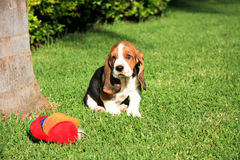 Basset hound puppy toy Royalty Free Stock Photography