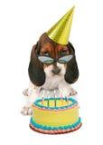 Basset Hound Puppy Wearing Sunglasses Royalty Free Stock Photo