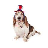 Basset Hound que veste o chapéu e o laço patrióticos Foto de Stock Royalty Free