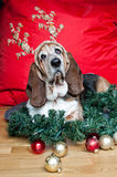Basset Hound with reindeer antlers at Christmas Royalty Free Stock Photography