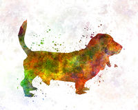 Basset Hound 01 in watercolor Stock Images