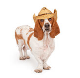 Basset Hound Wearing A Cowboy Hat Royalty Free Stock Images