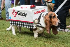 Basset Hound Wears Ambulance Costume At Atlanta Doggy Con Event royalty free stock photography