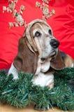 Basset Hound am Weihnachten Lizenzfreie Stockfotos