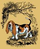 Basset illustration Stock Image