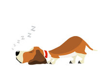 Basset sweet dream Royalty Free Stock Image