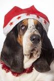 Bassethound одело для рождества стоковые фотографии rf
