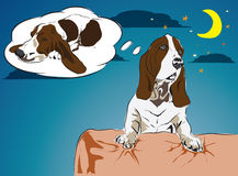 Bassethound want go to sleep Stock Images