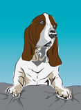 Bassethound want go to sleep Royalty Free Stock Photography