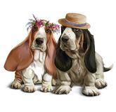 Bassethounds on a walk watercolor drawing. White background vector illustration