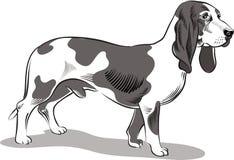 Bassets de chien, mâle illustration de vecteur