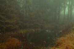 Bassin brumeux de forêt Photographie stock libre de droits