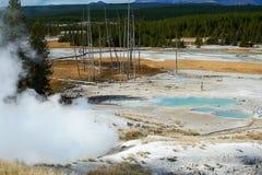Bassin de geyser de Norris, Yellowstone photo libre de droits