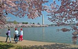 Bassin de marée et monument de Washington avec des fleurs de cerise Images libres de droits