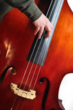Bassist Royalty Free Stock Photos