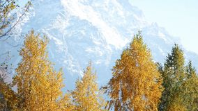 Basso angolo sparato della montagna della neve video d archivio