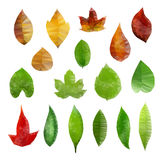 Basso poli foglie Fotografia Stock