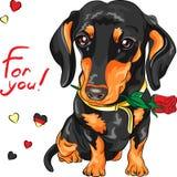Bassotto tedesco del cane di vettore con il fiore rosso royalty illustrazione gratis