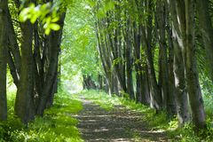 Basswood alley or park Stock Photography
