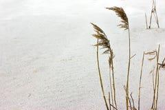 Bastão na areia branca Fotografia de Stock