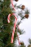 Bastón de caramelo en árbol Fotos de archivo