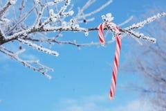 Bastón de caramelo en la ramificación nevosa fotos de archivo libres de regalías