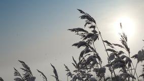 Bastón en el banco del lago del bosque cubierto con nieve en día soleado del invierno contra la perspectiva del cielo Es almacen de metraje de vídeo