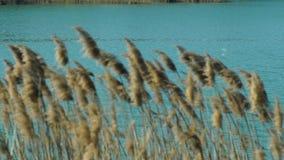 Bastón en el movimiento del lago del viento almacen de video