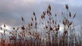 Bastón que sopla en el viento durante puesta del sol metrajes