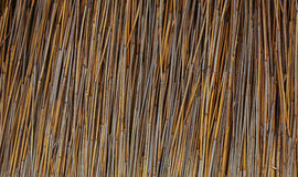 Bastón seco Imagen de archivo